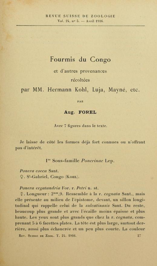Fourmis du Congo et d'autres provenances récoltées par MM. Hermann Kohl, Luja, Mayné, etc